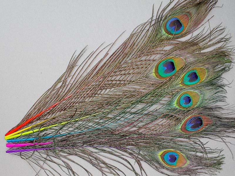 Gekleurde pauwenveren