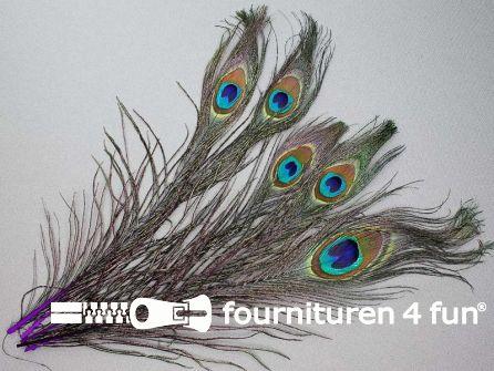 Pauwenveren 25cm gekleurd 5 stuks paars