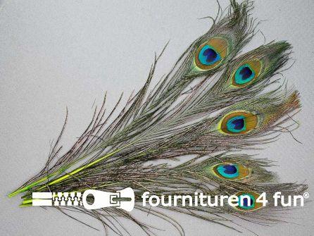 Pauwenveren 25cm gekleurd 5 stuks lime groen